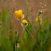 Evening Acid Grassland