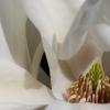 inner-magnolia-2