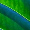 Eden Leaf Lines