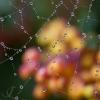 Captured Drops