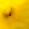 Daffodil Home