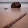 Goose Barnacle Log
