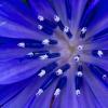 electric-blue