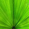 green-fan