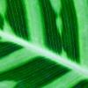 Leaf of Eden 2