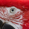 eye-of-the-macaw