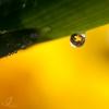 Spring Drop