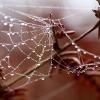 web-in-the-bracken