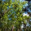 Beechwood Greens